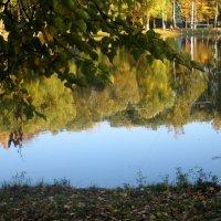 отражение осени  в воде :: Елена Семигина