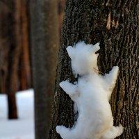 Снежный барс :: Татьяна Колесникова