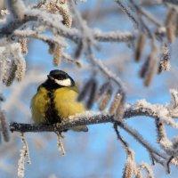 Морозный день.. :: Ната Волга