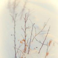 Снежная нежность :: Наташа Кошкина