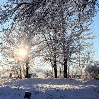 Морозный день :: Ирина Фирсова