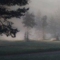 В утреннем тумане :: Юрий Цыплятников
