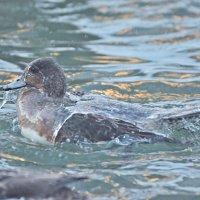 Наслаждение от купания в крещенские морозы. :: Андрей Синицын