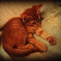 Когда живёт котёнок в вашем доме... :: Ольга Кривых