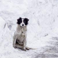 Зима :: Денис Будников