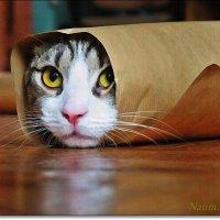 Кот в упаковке.Интересно,кому я достанусь? :: Лидия (naum.lidiya)