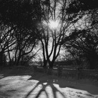 Зима в ЧБ(1) :: Артём Брав