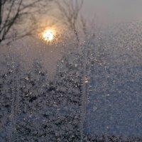 Выглянуло солнышко... :: Вера Андреева