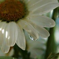 Мир цветов в одной капле :: nika555nika Ирина