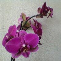 Комнатный цветок :: Миша Любчик
