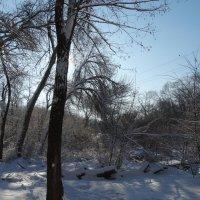 Зимой в лесопарке... :: Тамара (st.tamara)