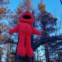 Игрушка в лесу :: Фотогруппа Весна - Вера, Саша, Натан