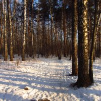 IMG_0860 - Сегодня морозно, но снега мало :: Андрей Лукьянов