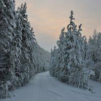 Зимушка, зима... :: Роман Ковалев