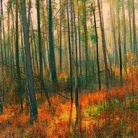 лес :: Алексей Карташев