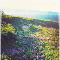 цветочная тропа :: VLADeeMIR *