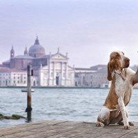 Привет из Венеции :: Ершов Андрей