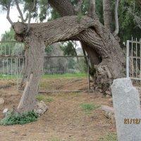 Олень - дерево! :: Герович Лилия