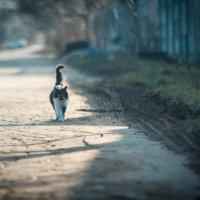 Зима в Анапе :: Александр Идикеев
