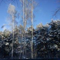 Утро в зимнем лесу :: Татьяна