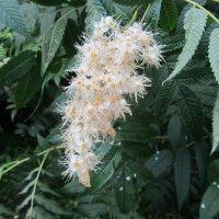 цветение в августе :: tgtyjdrf