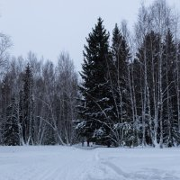Зима :: Алексей Стряпонов