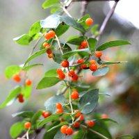 Дивные деревья :: TATYANA PODYMA