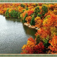 Золотая осень :: Лидия (naum.lidiya)