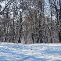 Зарисовки в зимнем парке... :: Тамара (st.tamara)