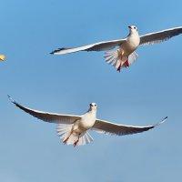 Чайки :: Александр Хайленко