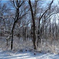 Солнечный морозный день... :: Тамара (st.tamara)