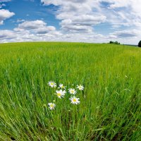Житное поле :: Валерий Талашов