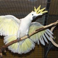 В душе-то я гордая птица - орёл :: Владимир Максимов