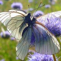 Поцелуй бабочек.... :: Павлова Татьяна Павлова