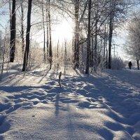 В зимний полдень :: Татьяна Копосова