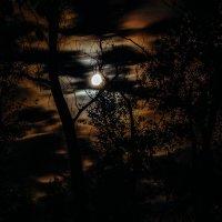 Ночь в лесу. :: Артемий Кошелев