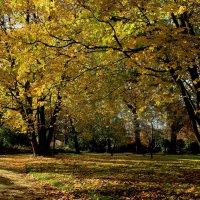Осень флоры :: Alexander Andronik