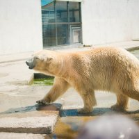 Зоопарк :: Mitrex .