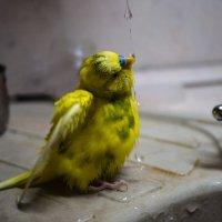 Душ для попугая :: Ольга Долбилина