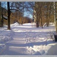 Зимнее солнце :: Любовь Чунарёва