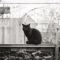 Кошки :: Татьяна Жуковская