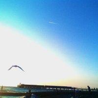 Полёт чайки на закате :: Владимир Ростовский