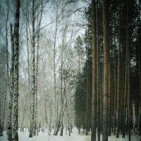 Лесная граница :: Виктор Жигалов