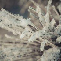 мороз :: Lasc1vo Артёмин