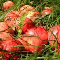 Яблочный рай :: Татьяна Ломтева