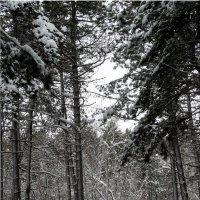 Прогулка по зимнему лесу... :: Тамара (st.tamara)