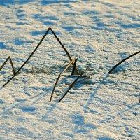 Из жизни снежного паука... :: Михаил Лобов (drakonmick)