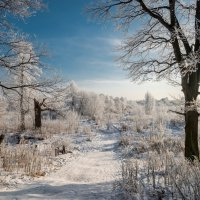 Мороз и солнце день чудесный!!! :: Юрий Бичеров