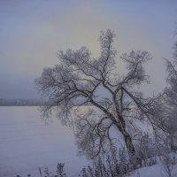 Морозное сиянье тишины :: Михаил (Skipper A.M.)