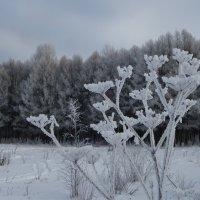 Очень холодно. :: Святец Вячеслав